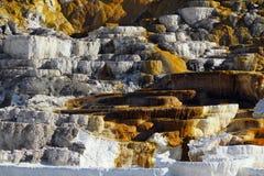 Детали террасы Minerva, Mammoth Hot Springs, национальный парк Йеллоустон, Вайоминг стоковое изображение