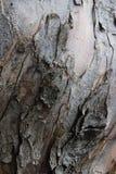 Детальная кора дерева, конец вверх стоковое изображение rf