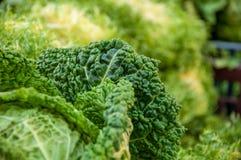 Деталь зеленых лист цветной капусты стоковое фото rf