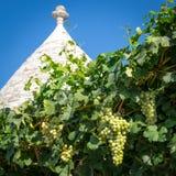 Деталь крыши типичного trullo с виноградным вином в Alberobello Италии стоковое изображение rf