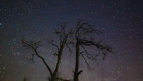 2 дерева против звездного неба Timelapse акции видеоматериалы