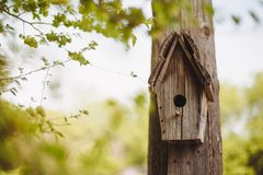 Деревянная гнездясь коробка вися на дереве стоковые фотографии rf