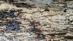 Деревянная доска ела термитами стоковые фотографии rf