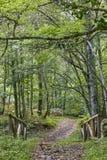 Деревянный путь в природном парке Muniellos леса astrological стоковая фотография