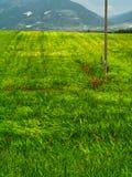 Деревянный столб в зеленом поле стоковые изображения