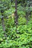 Деревья белки взбираясь в парке стоковые фотографии rf