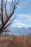 Деревья зимы осени в ландшафте долины пустыни восточной сьерра-невады Калифорния стоковое фото