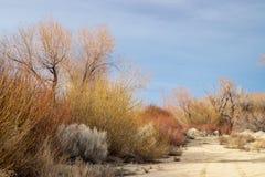 Деревья зимы осени в сьерра-неваде Калифорния грязной улицы ландшафта долины пустыни восточной стоковое изображение rf