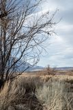 Деревья зимы осени в сьерра-неваде Калифорния грязной улицы ландшафта долины пустыни восточной стоковые изображения rf