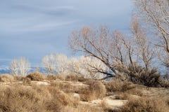 Деревья зимы осени в сьерра-неваде Калифорния грязной улицы ландшафта долины пустыни восточной стоковые изображения