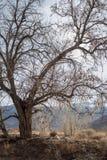 Деревья зимы осени в сьерра-неваде Калифорния ландшафта долины пустыни восточной стоковые фото