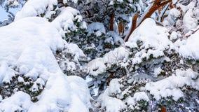 Деревья предусматриванные со снегом и заморозком в лесе зимы против голубого неба стоковое изображение rf