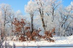 Деревья тяжело покрыли со свежей свежей изморозью на небе предпосылки голубом Заход солнца Природа чуда В заморозке утра, влажнос стоковые фото