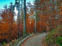 Деревья осени в польских горах стоковые изображения rf