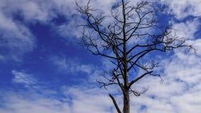 Дерево без листьев на голубом небе стоковые фотографии rf