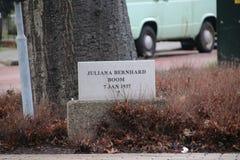 Дерево засаженное в Moordrecht для того чтобы удостоить принцессы Juliana Нидерланд в 1937 стоковое изображение