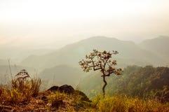 Дерево красивое на восходе солнца стоковое фото rf