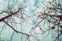 Дерево которое выходит падение, покидая только ветви стоковые изображения rf