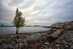 Дерево сценарного взгляда берега реки Виндзор Онтарио солитарное стоковые фотографии rf