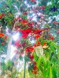 Дерево цветка стоковая фотография