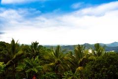 Джунгли сочного зеленого дождевого леса пальмы кокоса тропические в южном восходе солнца утра Eeast азиатском стоковое изображение rf