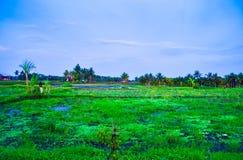Джунгли сочного зеленого дождевого леса поля террасы риса тропические в южном восходе солнца утра Eeast азиатском стоковое изображение