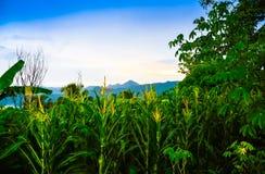 Джунгли сочного зеленого дождевого леса тропические в южном восходе солнца утра Eeast азиатском стоковое фото