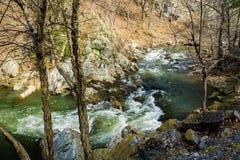 Дикий поток форели горы стоковые фотографии rf