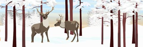 Дикий северный олень 2 в лесе зимы иллюстрация штока