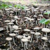 Дикое снятое поле грибов в Индонезии принятой с макросом стоковое изображение rf