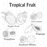 Coloring with the image of tropical fruit . stock illustration