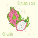Vector illustration with the image of dragon fruit stock illustration