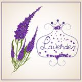Lavender . Wreath of herbs in a retro style with a bow. stock illustration
