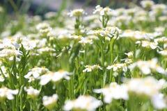 """Ð ` Ð?Ð"""" † Ð Ñ-‹Ðµ Ñ ² Ð?Ñ 'Ñ ‹weiße Blumen Stockbild"""