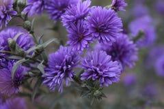 ЦР² ÐΜÑ 'Ñ ‹/Flowers Obraz Royalty Free