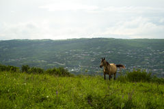 Ð  ÐºÐ¸Ñ FÖR ¹ Ñ FÖR а ½ РшаÐ'ÑŒ ¾ Л аД ÑŒÐ-¿ иЅ, ³ Ð°Ñ för Д уЅ, Häst på de alpina ängarna Royaltyfri Foto