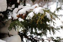 ½ а ÑˆÐ¸ÑˆÐºÐ°Ñ ³ Ð ½ ÐΜÐ  Ð Ñ… ‹'Ñ ¿ их Ñ Ð; Украина; Киев; снег на конусах ели Стоковое фото RF