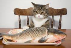 ¡ Ð на и рыбы Стоковые Фото