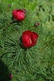 ¾ к 'Ð ² ÐΜÑ † Ð ¹ Ñ ‹Ð ½ Ñ красные цветок/ Ð ÐšÑ€Ð°Ñ Стоковое Изображение RF