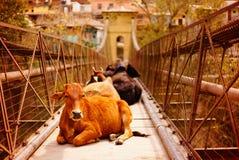 Ð说谎在桥梁和看的¡ ow 免版税库存照片