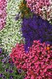 Ð ¡ arpet των λουλουδιών Impatiens Στοκ φωτογραφία με δικαίωμα ελεύθερης χρήσης