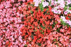Ð ¡ arpet των λουλουδιών Impatiens Στοκ εικόνα με δικαίωμα ελεύθερης χρήσης