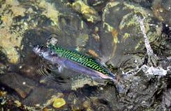 ¡ Ð atching рыбы Стоковые Фотографии RF