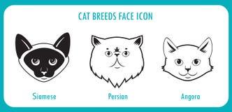 Ð ¡ bij de pictogrammen van het rassengezicht Siamese angorawol, Perzisch, Stock Foto's