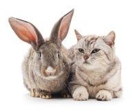 Ð ¡ bij en konijn Stock Foto