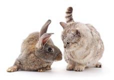 Ð ¡ bij en konijn Royalty-vrije Stock Afbeelding
