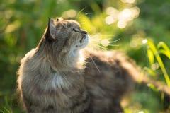 Ð ¡ bij op aardachtergrond Allergieën voor dieren, kattenbont caring stock foto
