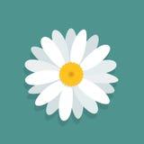 Ð ¡ hamomile kwiat odizolowywający na błękitnym tle Obrazy Stock
