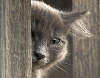 Кitten-flüchtige Blicke heraus, Blicke in die Kamera mit einem Auge Stockbild