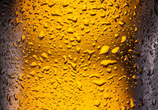 Drops on a bottle beer. Stock Photography